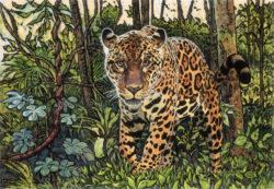 Amazonian Jaguar